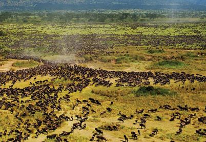 Un voyagiste répertorie les meilleurs choix pour les voyageurs solo en Afrique